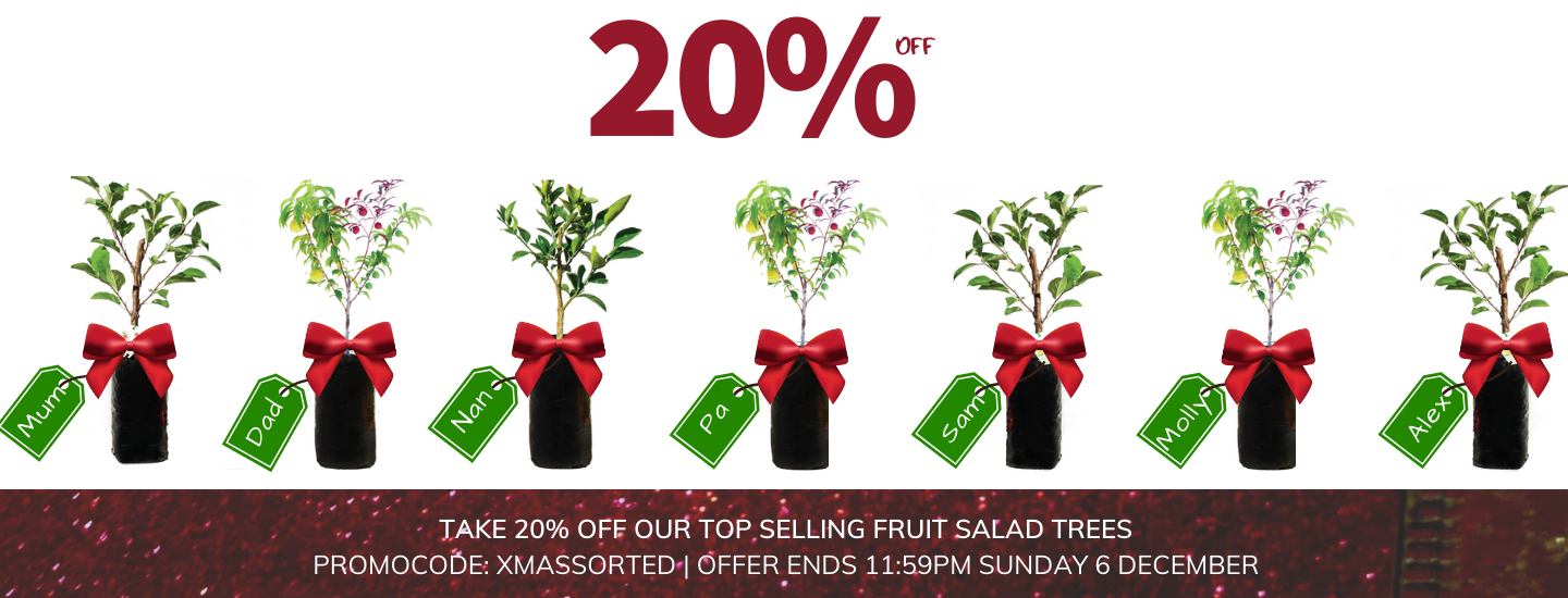 Christmas SALE Top Selling Fruit Salad Trees