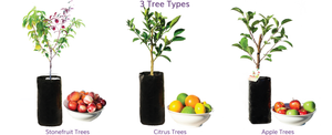 Fruit Salad Trees are multi grafted fruit trees made in New South Wales, Australia. They contain fruit from the same family on one tree. Stone fruit, Citrus fruit and multi Apples on the same tree!