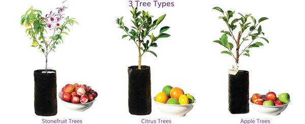 Types of fruit salad trees - different fast fruiting fruit on the same tree