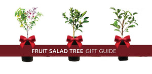 Fruit Salad Tree Gift Guide for unique, different presents for mum, dad, and whole family