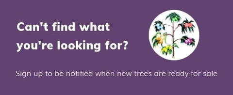 sign up to be notified when new trees are ready for sale