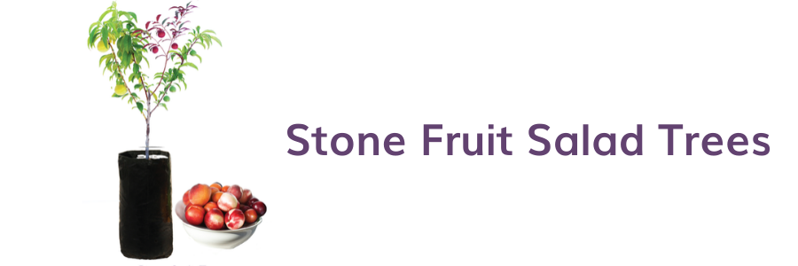 Seasonal care for your stone fruit salad trees