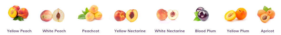 stone fruit salad trees come in combinations for all australian climates (warm, temperate, humid, dry, alpine and cool) choose from peach apricot peachcot nectarine and plum