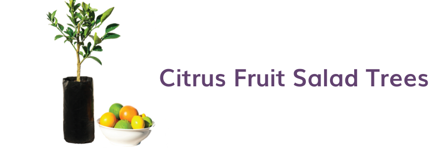 Seasonal care for your citrus fruit salad trees