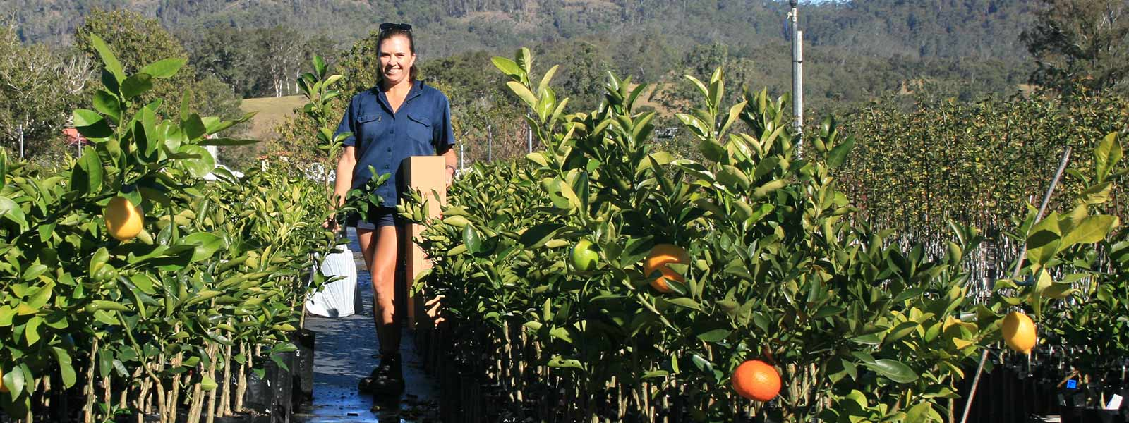 free shipping australia wide fruit trees