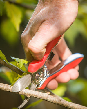 Stainless Steel Secateurs with a Lifetime Warranty