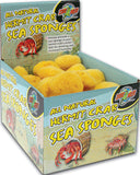 All Natural Hermit Crab Sea Sponges Display
