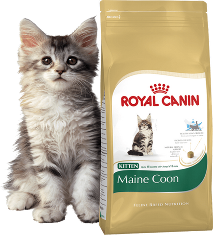 Royal Canin - Mainecoon Kitten - XclusivePets
