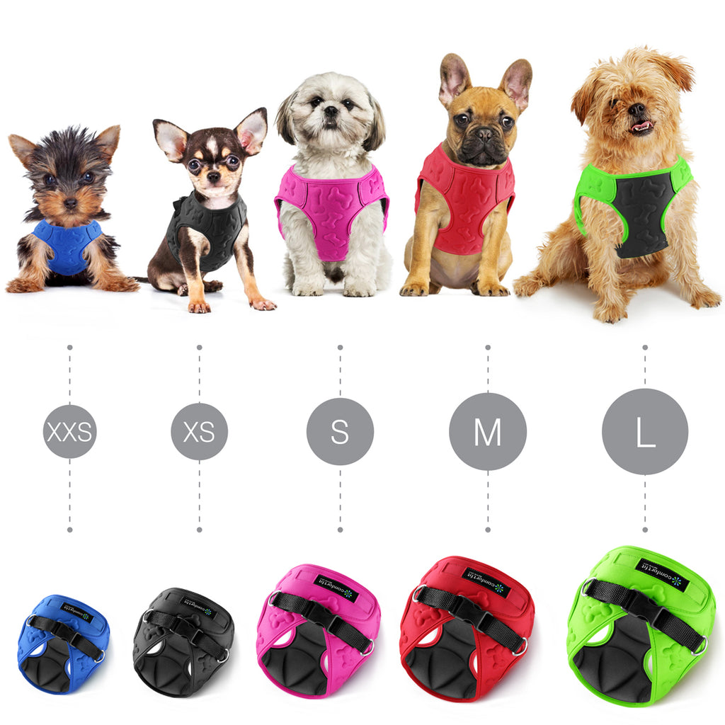 Dog Accessories - Buy Trendy Small Dog Harness Online