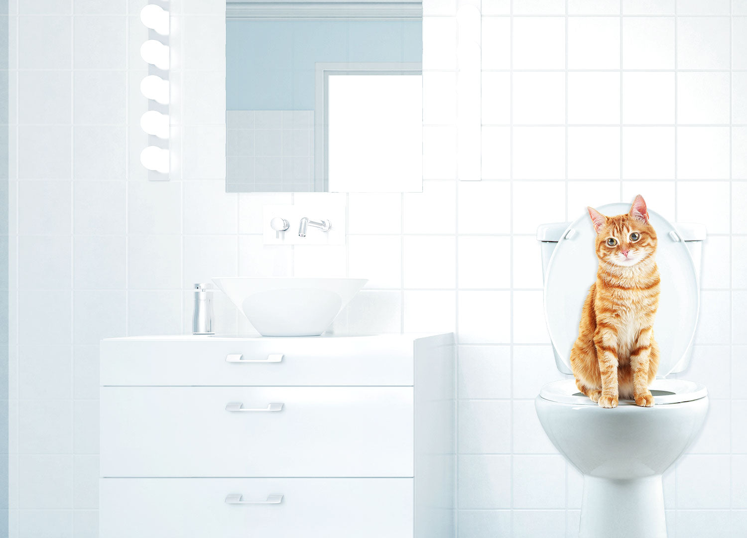 how does it work how to train your cat to use the toilet the how does it work