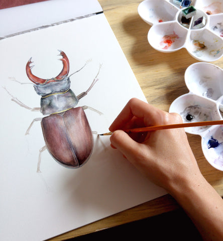 Stag Beetle, illustration, painting, watercolour