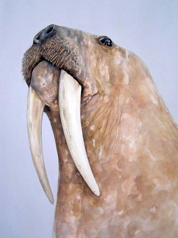 whiskers walrus