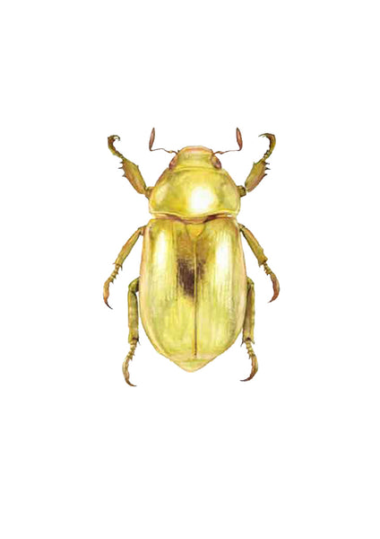 Golden Jewel Beetle
