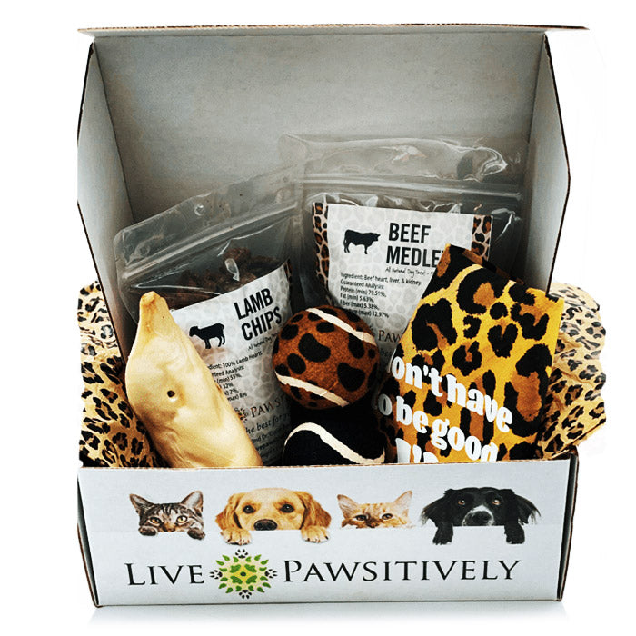The Kitty Pawsitive Package