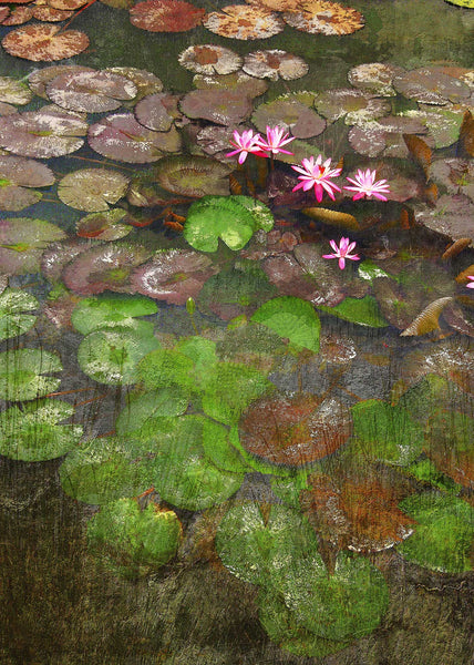 SIX WATER LILIES IN A POND