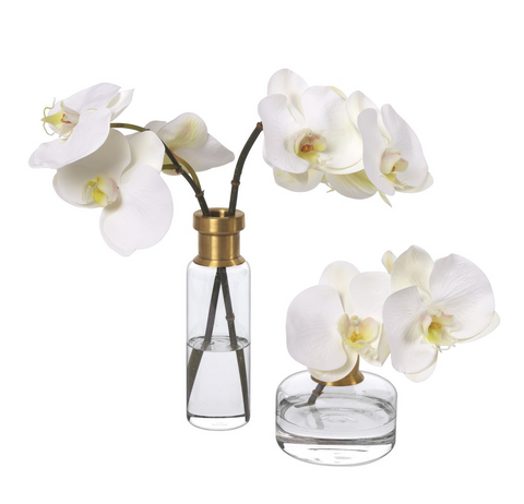 Phalaenopsis orchids, set of 2, in glass bud vases - Faux Floral Couture