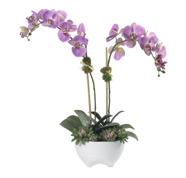 Purple phalaenopsis, 2 stems, in white bowl - Faux Floral Couture