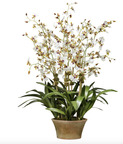 Cream dancing orchid, 7 stems, in Berkshire planter - Faux Floral Couture