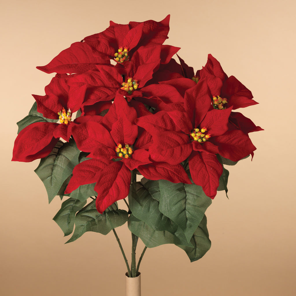 Velvet Poinsettia Bush