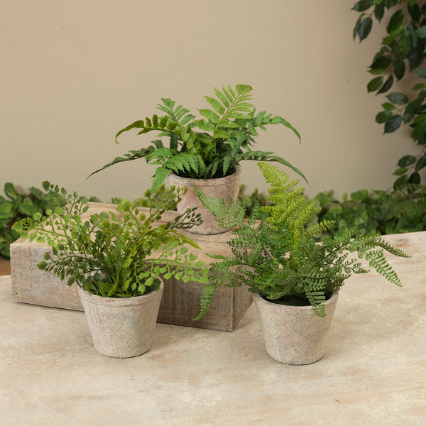 "10"" Fern in Cement Pot, 3 Assorted"