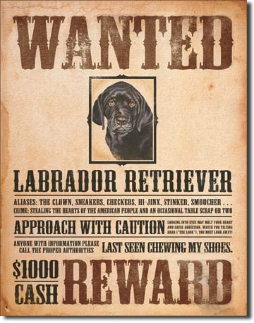 Black Lab - Wanted Poster Tin Sign