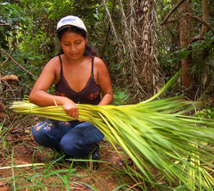 Artisan from Chino harvesting chambira palm leaves. Photo by Campbell Plowden/Amazon Ecology
