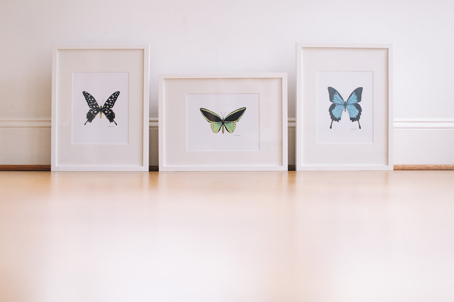 Butterfly Wall Prints (Framed)