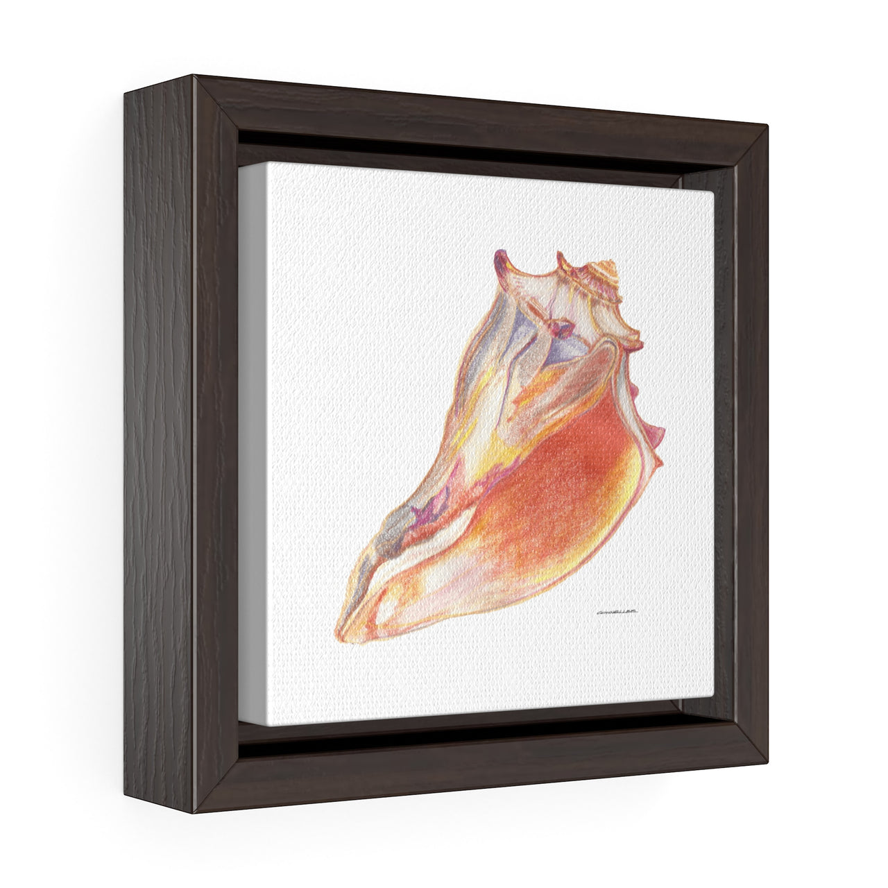 Canvas Wall Print -  Giant Conch Shell - Square Framed Premium Gallery Wrap Canvas - Falling Leaf Card Co.