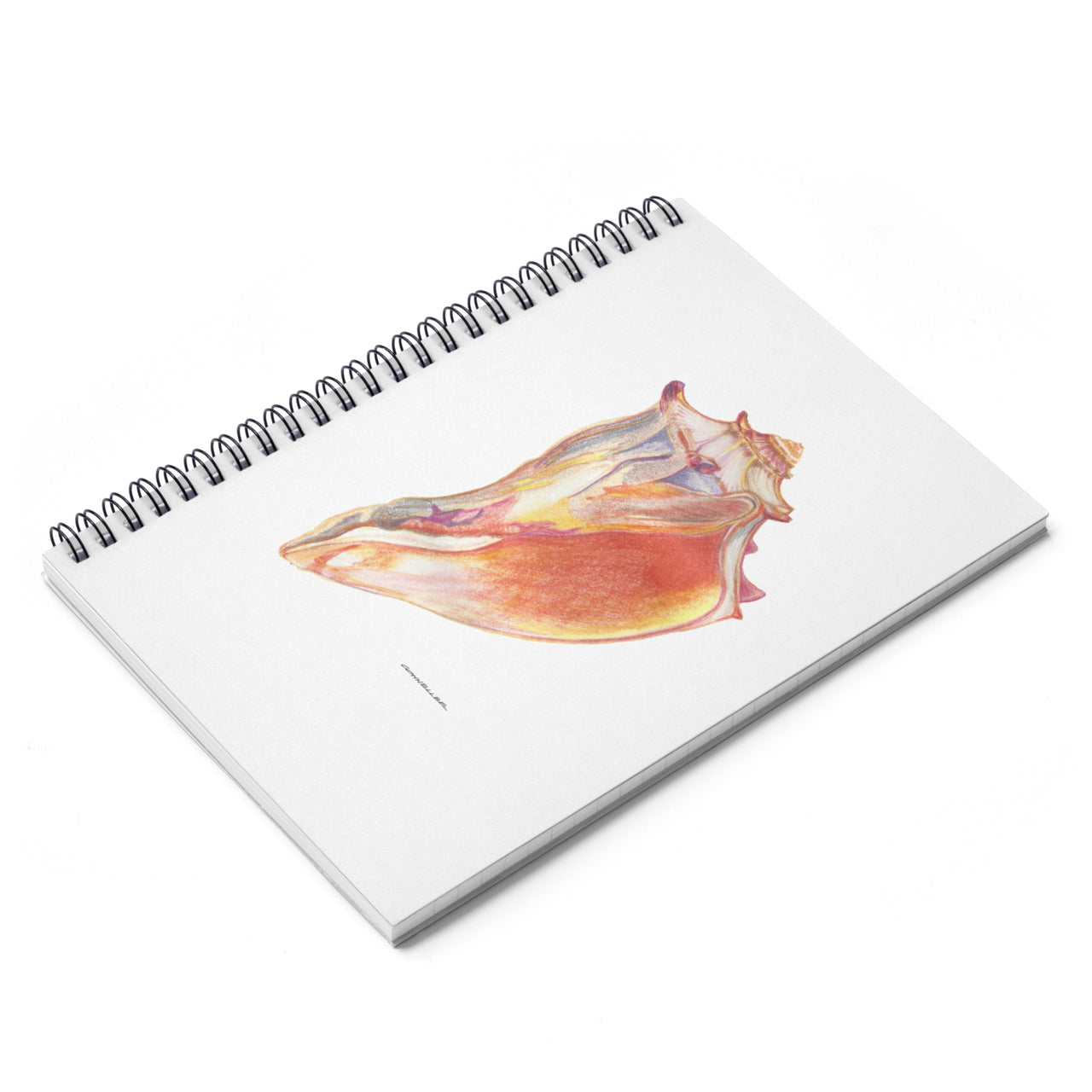 Journal - Giant Conch Shell Spiral Notebook - Ruled Line - Falling Leaf Card Co.