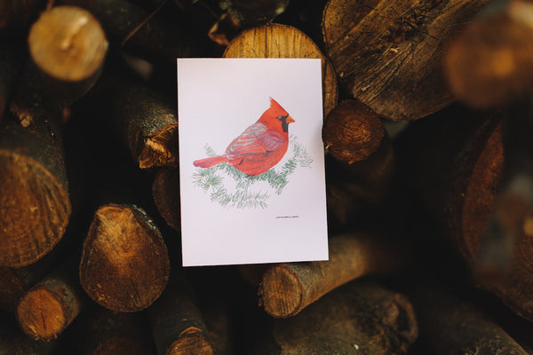 Wild Bird Note Card Box Set (Blank) - Falling Leaf Card Co.