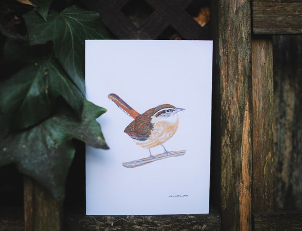 Carolina Wren Greeting Card (Blank) - Falling Leaf Card Co.
