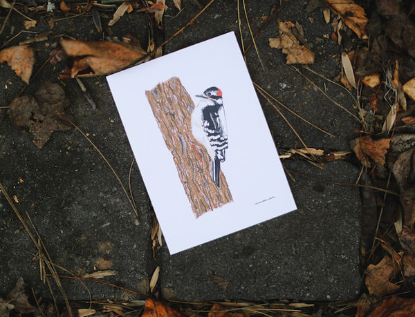 Downy Woodpecker Father's Day Card - Falling Leaf Card Co.