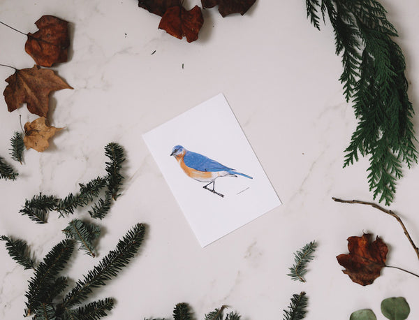American Bluebird Note Card (Blank) - Falling Leaf Card Co.