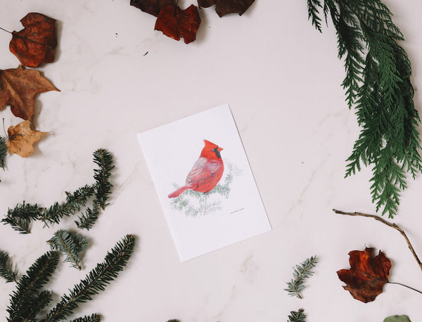 Cardinal Greeting Card (Blank) - Falling Leaf Card Co.
