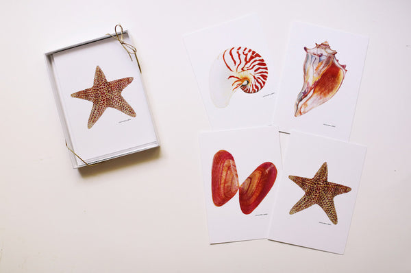 Seashell Note Card Set (Blank) - Falling Leaf Card Co.