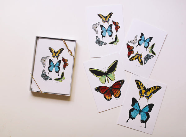 Butterfly Combo Note Card Set (Blank) - Falling Leaf Card Co.