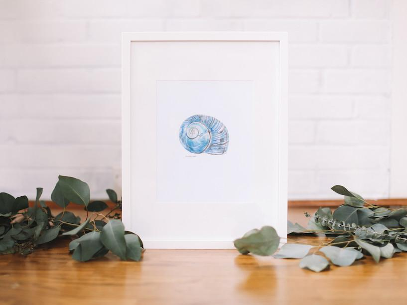 Blue Conch - Seashell Wall Print (Framed) - Falling Leaf Card Co.