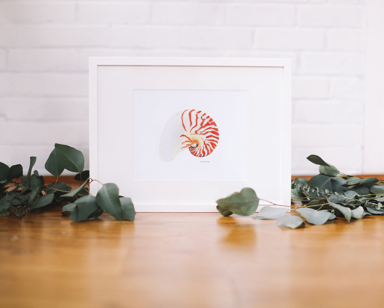 Chambered Nautilus Wall Art (Framed) - Falling Leaf Card Co.