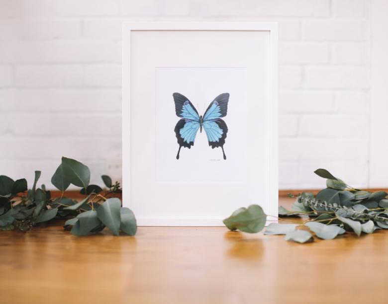 Royal Blue Butterfly Wall Art (Framed) - Falling Leaf Card Co.