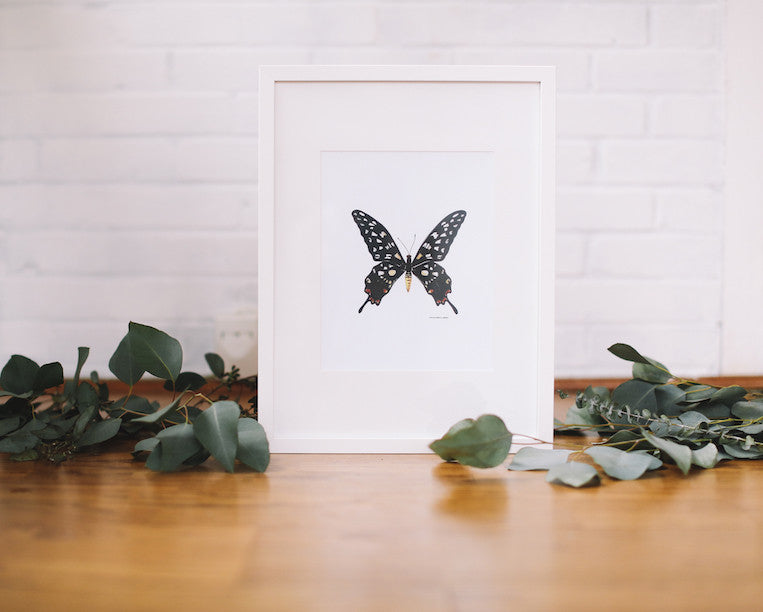 Giant Madagascar Butterfly Wall Art (Framed) - Falling Leaf Card Co.