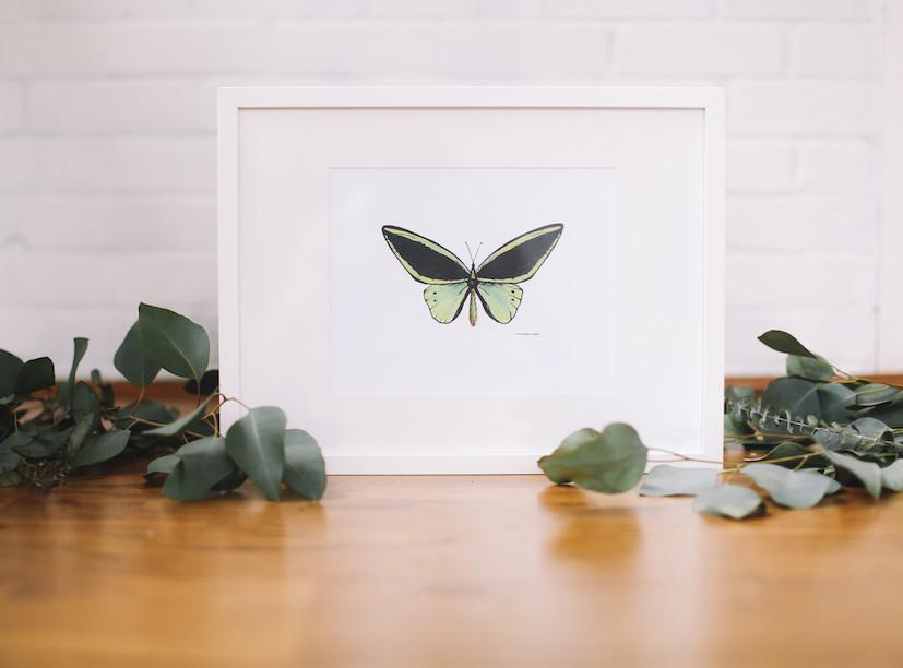 Green Butterfly Wall Art (Framed) - Falling Leaf Card Co.