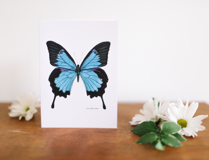Royal Blue Butterfly Greeting Card (Blank) - Falling Leaf Card Co.