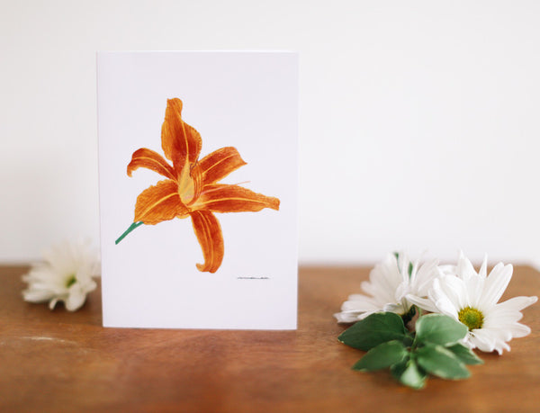 Tiger Lily Greeting Card (Blank) - Falling Leaf Card Co.