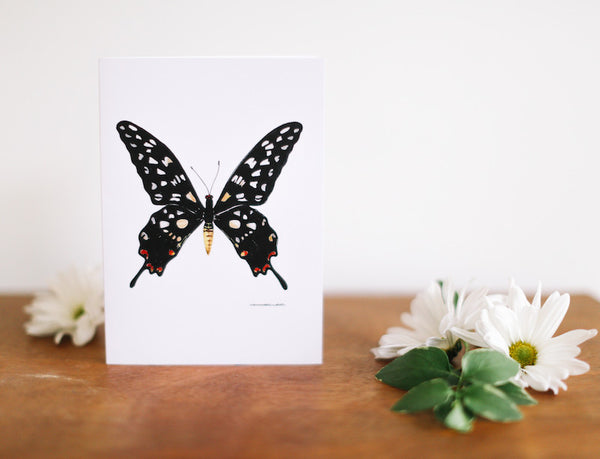 Black Madagascar Butterfly Note Card (Blank) - Falling Leaf Card Co.