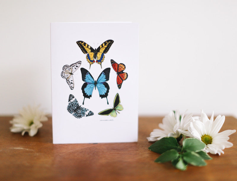 Butterfly Pentagon Note Card (Blank) - Falling Leaf Card Co.