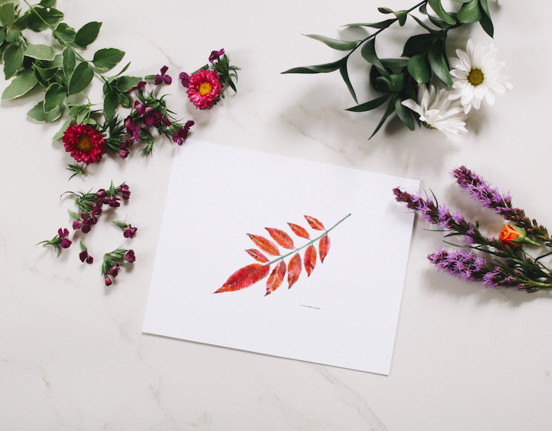 Sumac Leaf Wall Print - Falling Leaf Card Co.