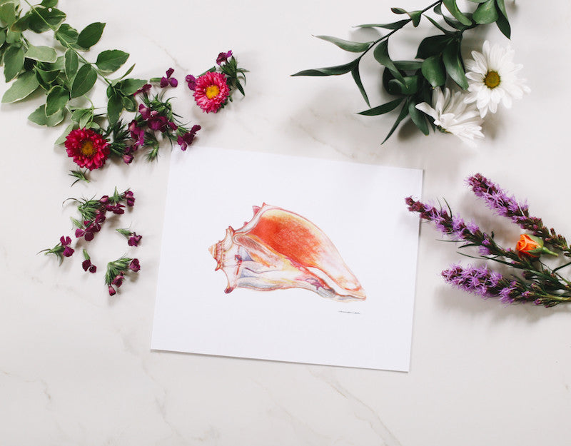 Conch Shell Wall Art - Falling Leaf Card Co.
