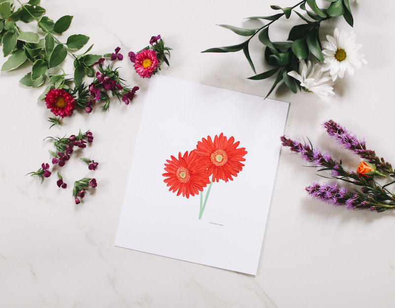 African Daisy Wall Art - Falling Leaf Card Co.