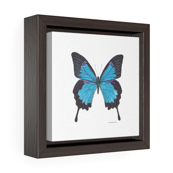 Canvas Wall Print - Blue Swallow Tail Butterfly -  Square Framed Premium Gallery Wrap Canvas - Falling Leaf Card Co.