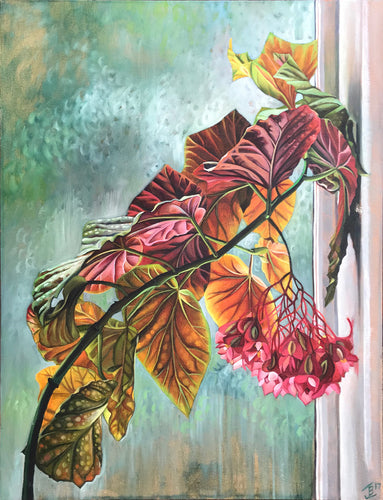 Cane Begonia by Joanna Bisson